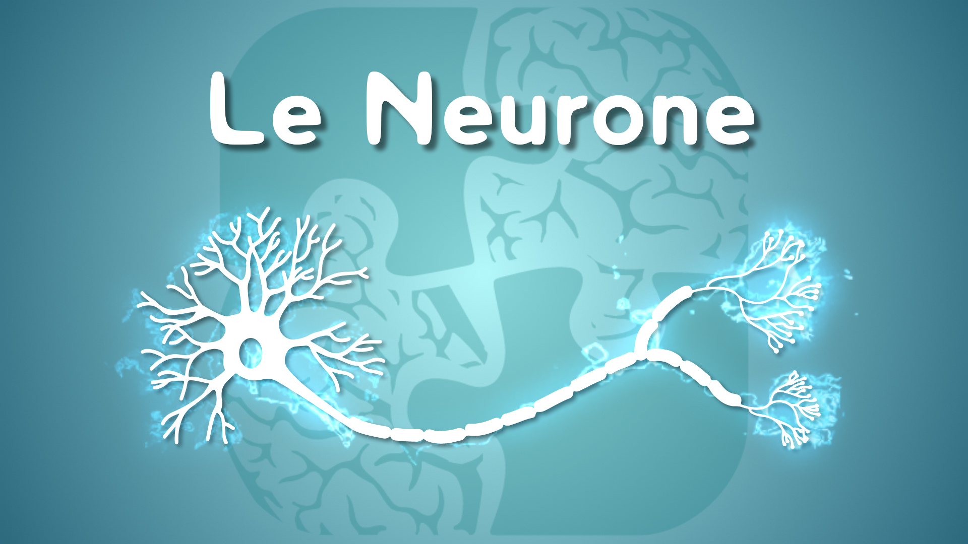 Neurolexique #1 – Le Neurone