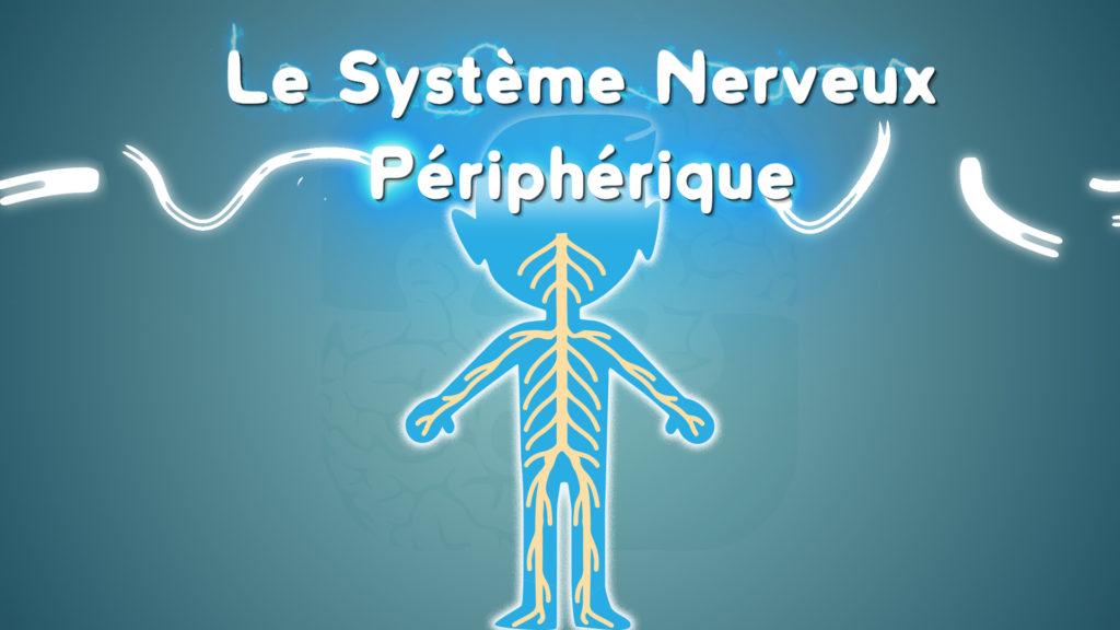 découvrez le esystème nerveux périphérique grâce à une courte vidéo de vulgarisation